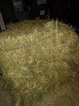 1 Pound ~ 1st Cut Timothy Hay: Rabbit, Guinea Pig, Chinchilla, etc